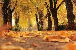 trees-1789120__340
